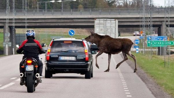 Körning i Sverige. Köp registrerat svenska körkort